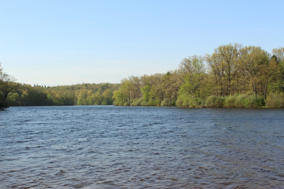 Lake and Trees in Spring