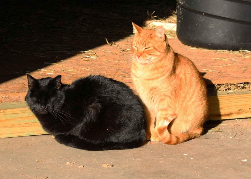 Black and Orange Cats