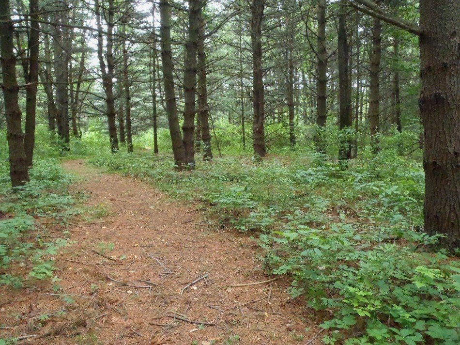 Pinewood Trail