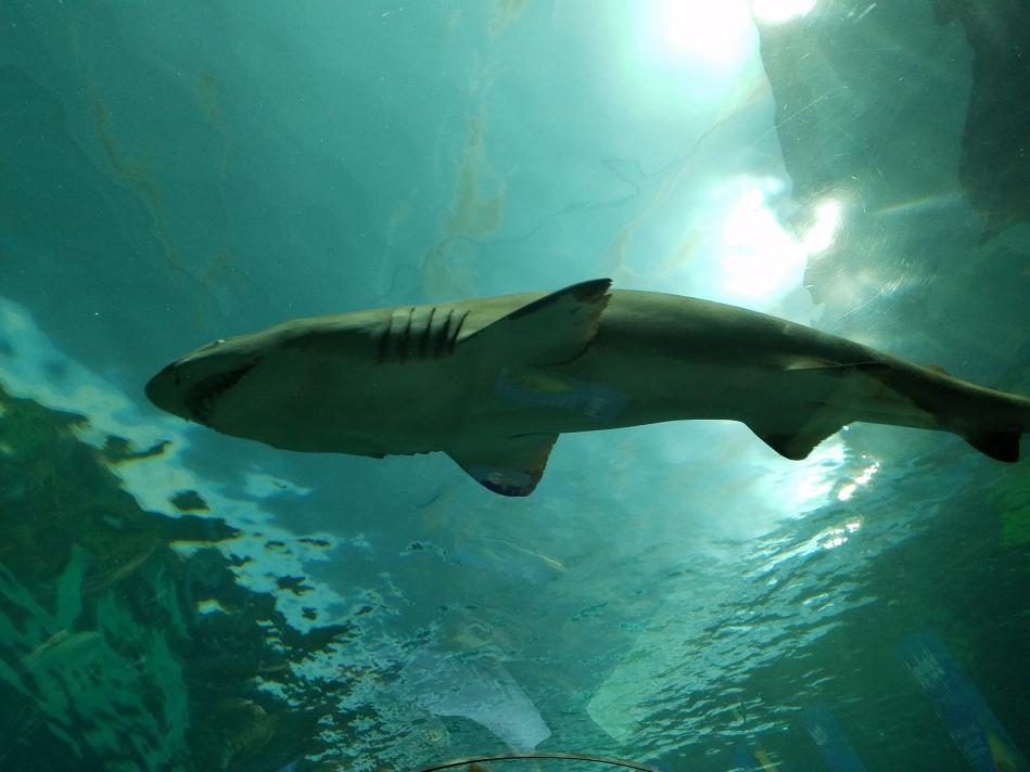 Aquarium 2017 2