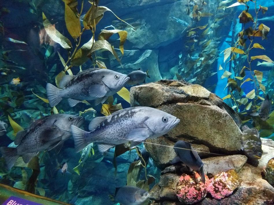 Aquarium 2017 8