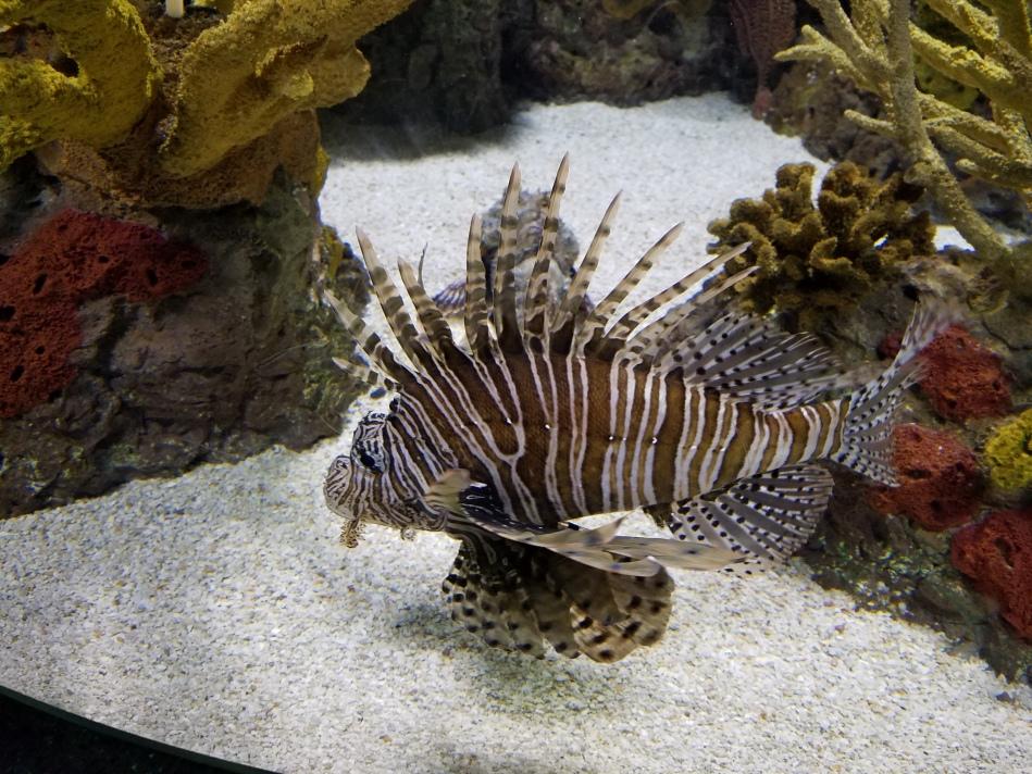 Aquarium 2017